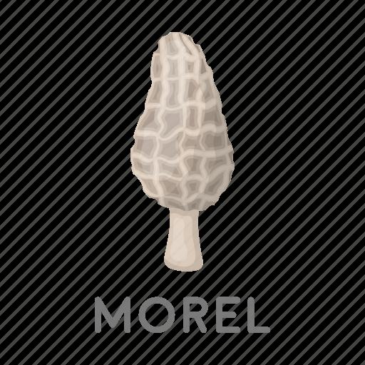 Delicacy, food, forest, morel, mushroom, plant icon - Download on Iconfinder