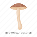 brown cap boletus, delicacy, food, forest, mushroom, plant icon