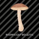 brown cap boletus, delicacy, food, forest, mushroom, plant