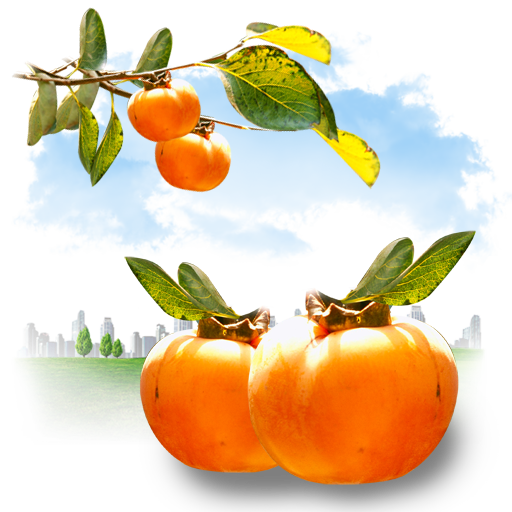 fruits, persimmon icon