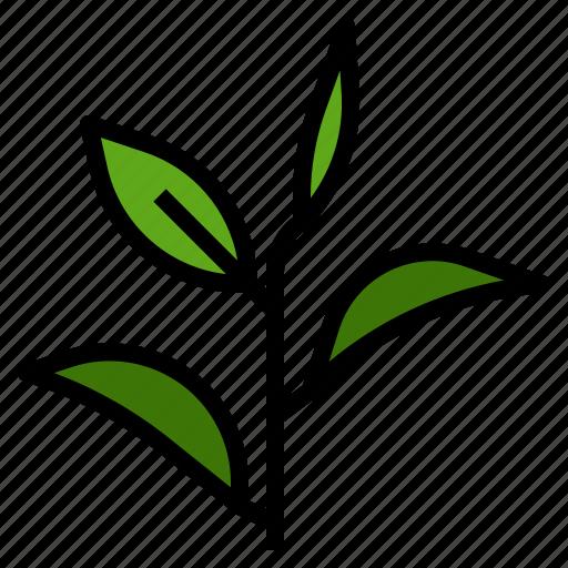 essential, fragrant, green, leaf, oil, scent, tea icon