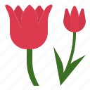 aroma, flower, fragrant, perfume, scent, therapy, tulip icon