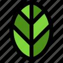 ecology, leaf, nature, plant
