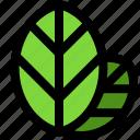 nature, ecology, leaf, plant