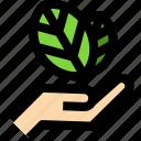 nature, plant, ecology, leaf