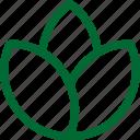 nature33, green, ecology, environment, plant, garden, gardening