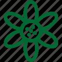 nature7, green, ecology, environment, plant, garden, gardening