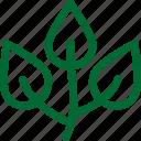 nature8, green, ecology, environment, plant, garden, gardening