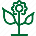 nature35, green, ecology, environment, plant, garden, gardening