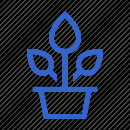flower, indoor, plant, pot icon
