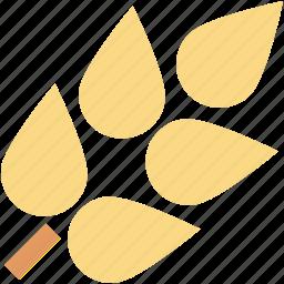 barley, durum wheat, grain, wheat, wheat ear icon