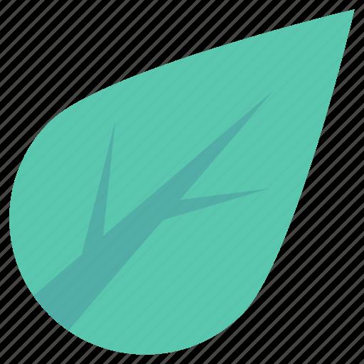 ecology, foliage, greenery, leaf, tree leaf icon