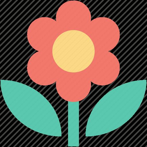 blossom, floral, flower, spring flower, sunflower icon