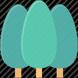 cypress tree, evergreen, park, pine tree, trees icon