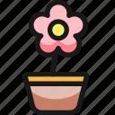 flower, pot