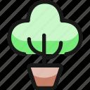 plant, bonsai