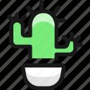 plant, cactus
