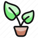 plant, pot, 1