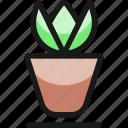 plant, pot, 2