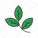 branch, floral, flower, garden, leafage, nature, plant icon
