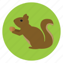 animal, nature, pet, rodent, squirrel, wildlife icon