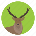animal, deer, forest, hart, nature, stag, wildlife