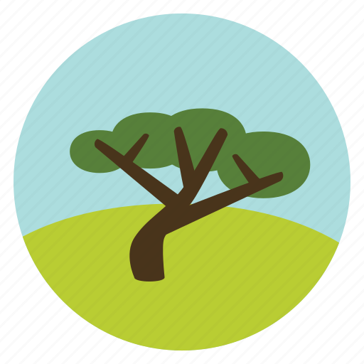 forest, green, nature, olive, tree, woods icon