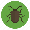 beetle, bug, crawler, insect, insects, nature, stink bug