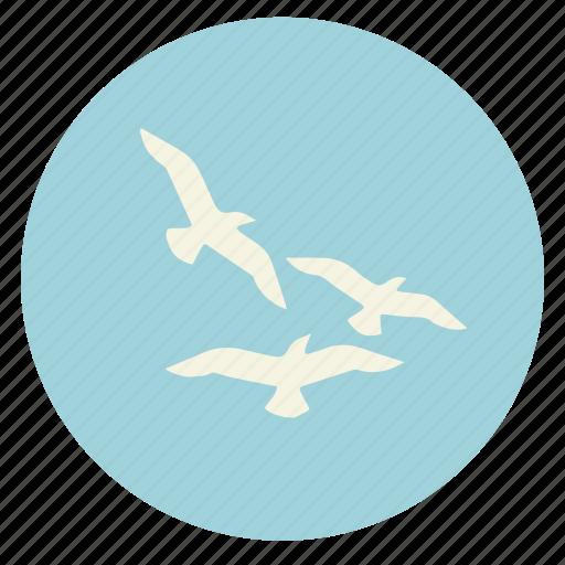 bird, birds, flying, nature, sea gull, seagull, sky icon