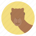 animal, camel, desert, nature, wildlife icon