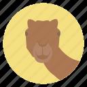 animal, camel, desert, nature, wildlife