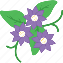 anemone, bloom, flower, nature, spring icon