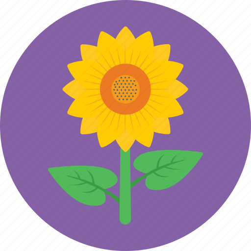 Beauty, blossom, flower, petals, sunflower icon - Download on Iconfinder