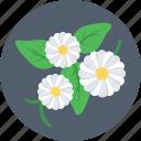 daffodil, flower, nature, petal, spring