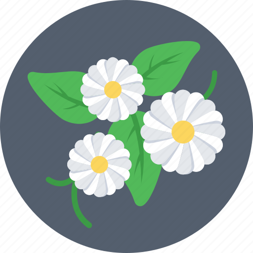 daffodil, flower, nature, petal, spring icon