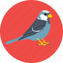 bird, dove, fly, pigeon, sparrow icon