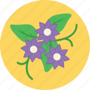 bloom, flower, nature, pansy, spring
