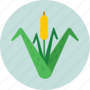 bullrush, cattail, plant, reed, sedge icon