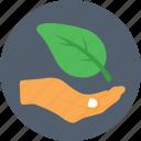 ecology, gardening, leaf, nature, plantation