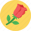 blossom, flower, gardening, red rose, rose icon