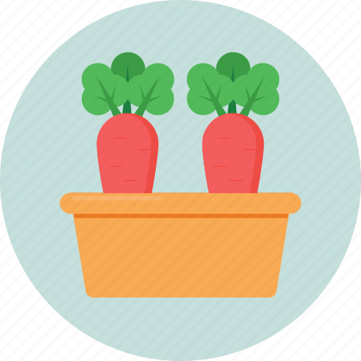 carrot, food, organic, root vegetable, vegetable icon