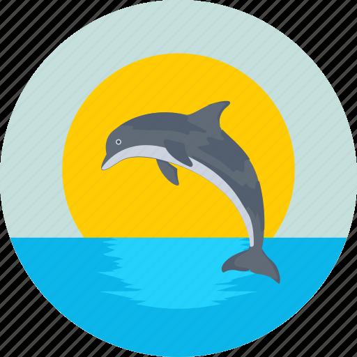 animal, dolphin, mammal, sea, whale icon