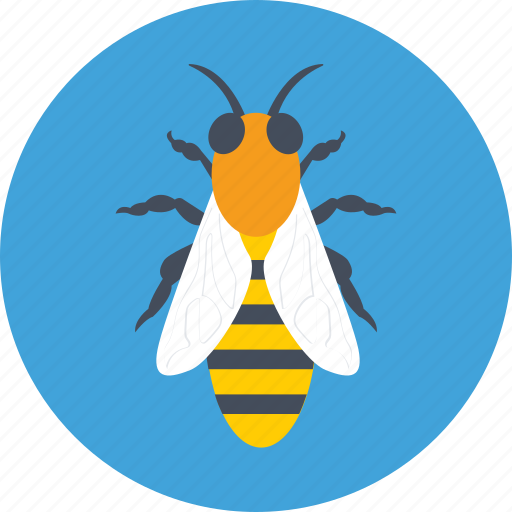 bee, fly, honey bee, insect, nature icon