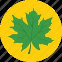 autumn, maple leaf, leaf, foliage, nature