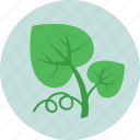 ecology, foliage, greenery, leaf, nature icon