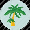 beach, nature, palm, summer, tree