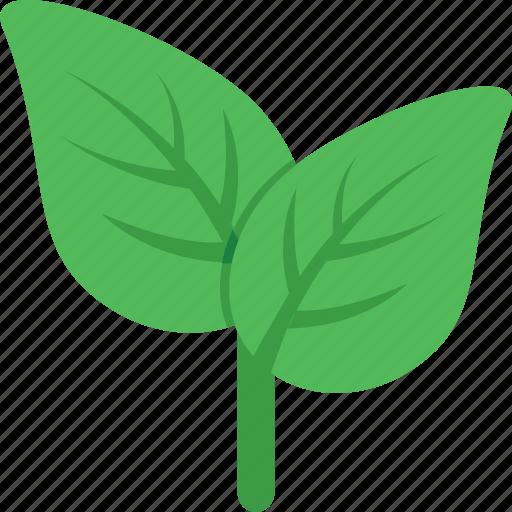 ecology, foliage, greenery, leaf, nature icon