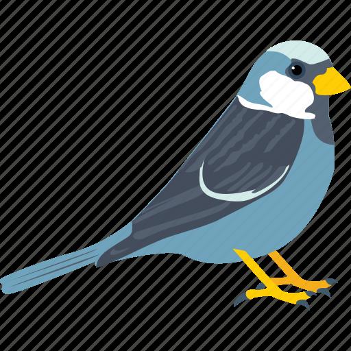 bird, dove, fly, pigeon, sparrow icon