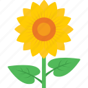 beauty, blossom, flower, petals, sunflower icon