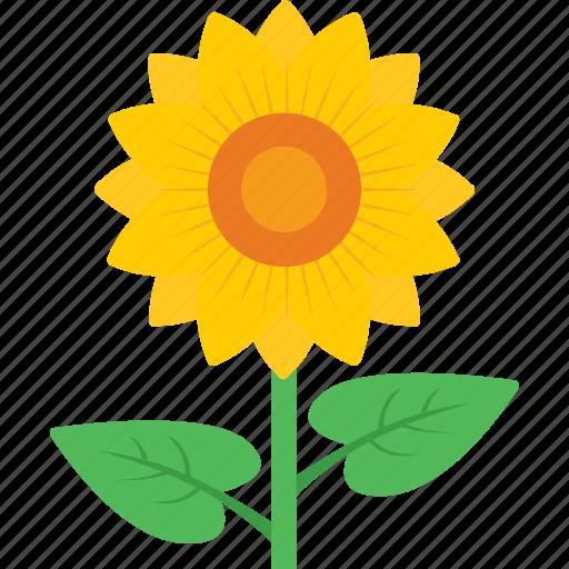 beauty, blossom, flower, petals, sunflower icon